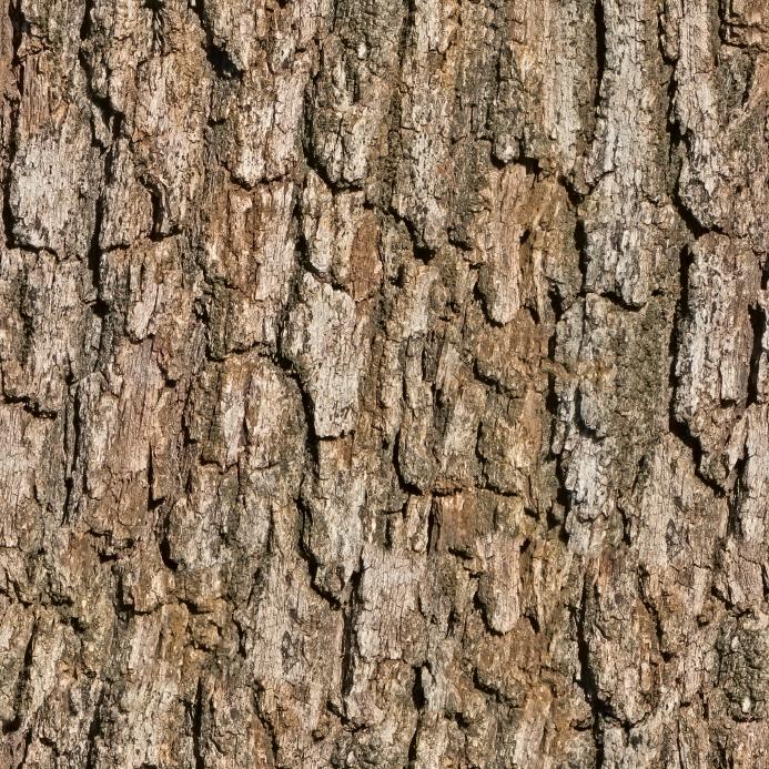 0111_wood_bark