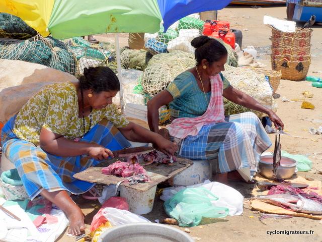 Vendeuses de poisson sur la plage de Vizhinjam