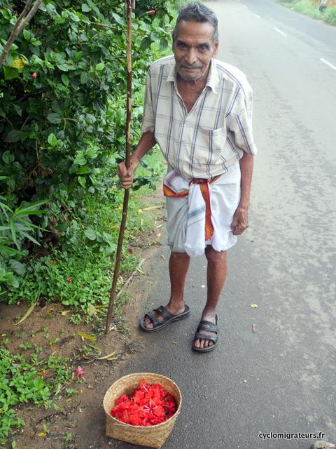 Ramasseur de fleurs d'ibiscus