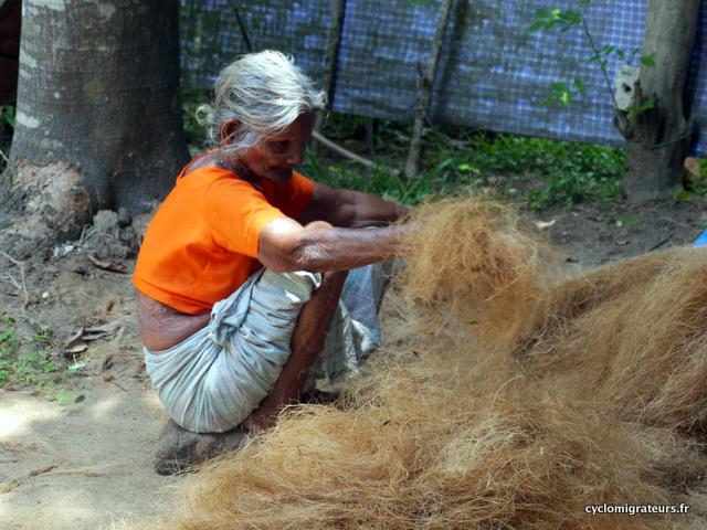 Préparation de fibres de coco
